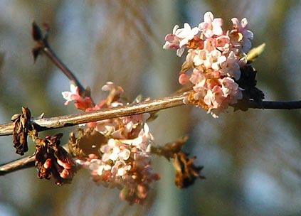 bloempje.jpg