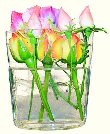 bloems.jpg