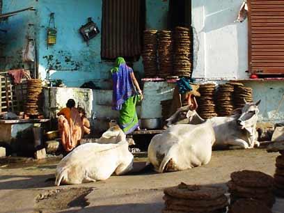 ujjain-landelijk.jpg